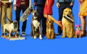 Nossa Vida com Cães | Um Filme Fofo e Repleto…